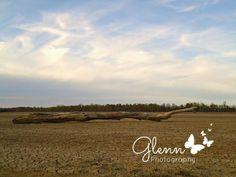 Glenn Studios:  Glenn Photography Evansville, Indiana
