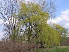 Parc des Prairies,Laval Plants, Photos, Pictures, Plant, Planets