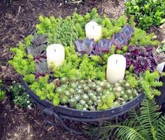 The dark-purple floral-like succulents on the far right are Sempervivum, the light-green spreader and filler seen throughout is Sedum 'Angelina,' and other succulents in shades of chartreuse (light yellow-green) and purple are mixed in.