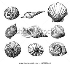 Hand drawn set of various seashell illustration. Isolated on white background. - stock vector