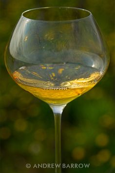 Orange Wine in the Vineyard. These are white wines made in a red wine style with extended skin contact to garner that extra colour, aroma and concentration. Some can be sensational. Others more akin to cider in aroma and flavour. With luck a few of the former, as delicious as this Orange Wine in the Vineyard was. This weeks Sunday Wine Shot is one such orange wine, taken in the Batic vineyards in Slovenia.