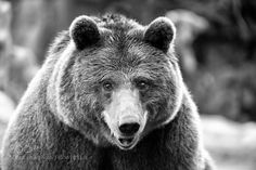 http://ift.tt/1K6283m #animals Hi by JesusMartinMirelis http://ift.tt/1onIpCj #pierceandbiersadorf
