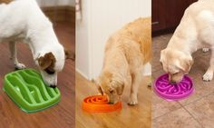 Slo Down On The Kibble w/ Slow Bowl! Can also use for small treats to keep pups occupied for longer