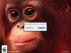 WWF Save #ads, #advertising, #cute