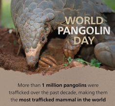 Happy World Pangolin Day! Pet Day, Mammals, Garden Sculpture, The Past, Outdoor Decor, Join, Animal, Friends, Amigos