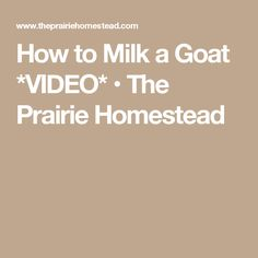 How to Milk a Goat *VIDEO* • The Prairie Homestead