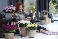 Surround yourself with pots of Chrysanthemum #plants