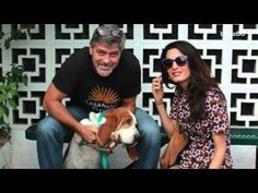 Dog Who Used To Wander The Streets Finds A Home With George Clooney's Family – iHeartDogs.com