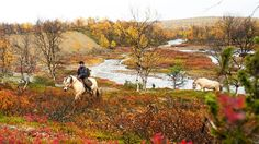 While Lapland is beautiful in the winter, it's well worth visiting in the autumn, too. The views are phenomenal at the time of autumn leaf colour.