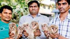 Meet the Three Brothers in Mumbai Who Have Saved Over 700 Birds!