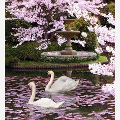 #flowers #flower #TagsForLikes #petal #petals #nature #beautiful #love #pretty #plants #blossom #sopretty #spring #summer #flowerstagram #flowersofinstagram #flowerstyles_gf #flowerslovers #flowerporn #botanical #floral #florals #insta_pick_blossom #flowermagic #instablooms #bloom #blooms #botanical #floweroftheday http://gelinshop.com/ipost/1515804698500686721/?code=BUJOFebAGOB