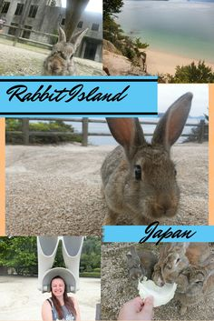 Rabbit Island in Japan - A whole island filled with adorable bunnies!
