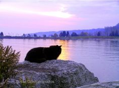 Another Day Ends, Cat at Sunset, gift 30, fine art photography, print or cards, home decor, mauve, landscape via Etsy