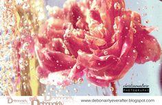 The memories... Vintage Rose.