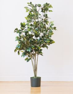 """This low-height, leafy plant is perfect for filling up an empty corner in your family room. """"ZZ plants need low to medium light and require little attention,"""" says Vass. A pot, a window, and a little water here and there are all this guy needs.   - Redbook.com"""