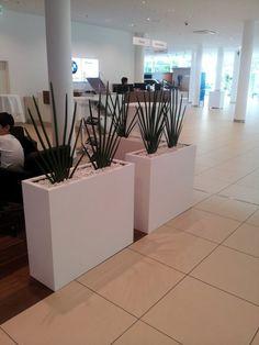 Květináče v kanceláři Bmw, Plants, Plant, Planets
