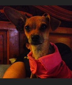 Guadalupe the Chi