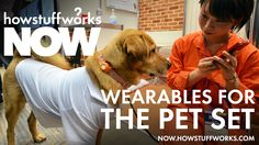 Do these smart collars for dogs have tracking for squirrels chased?