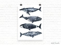 Ad: In love with watercolor Ocean by Kat_Branches on Hi friends! Welcome to my store)🐬 This is a simple hand-written watercolor megapack ocean animals (whales, dolphins etc. Watercolor Illustration, Graphic Illustration, Illustrations, Business Newsletter Templates, Watercolor Ocean, Dolphins, The Dreamers, Stock Photos, Illustration