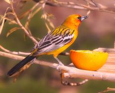 How to Build an Orange Peel Bird Feeder