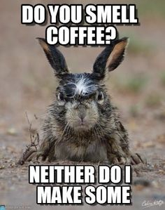 do you smell coffee? Angry Hare meme - Cast your vote, share, discuss and browse similar memes Coffee Is Life, I Love Coffee, Best Coffee, My Coffee, Monday Coffee, Coffee Talk, Funny Coffee, Morning Coffee, Funny Animal Memes