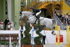 Enter in the equestrian universe with World of Showjumping : news, rankings, next events, archives. Show Jumping, Beautiful Creatures, Grand Prix, Equestrian, Horses, Jumpers, Sports, Pageants, Hs Sports