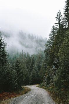 morgan-phillips: Forest Road - Morgan Phillips