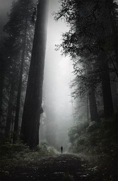 Alone in the oldest of forests.......
