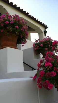 Large pots of ivy geraniums greet guests. Spanish Revival, Spanish Colonial, Spanish Style, Dream Garden, Garden Art, Ivy Geraniums, Spanish Exterior, Pink Geranium, Ranch Style Homes