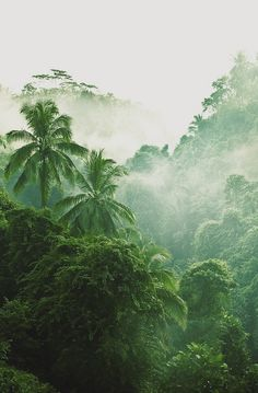 trees clouds forest tropical tropical forest