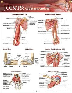 Joints: Upper Extremities anatomy poster shows key bones, muscles, tendons, nerves and arteries. Elbow images show bones and ligaments.