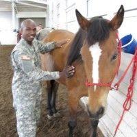 Real war horses! Vet