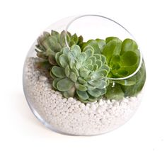 photo of Easy DIY centerpiece idea- rich succulents in clear Zen bowl with white stones