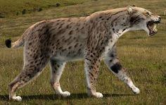 Eurasian Homotherium.
