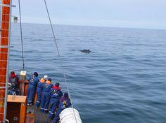 Whale watching in Húsavík, northern Iceland
