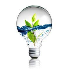Plant and water inside light bulb Light Bulb Plant, Zentangle, Water Poster, Surrealism Photography, Lamp Bulb, Environmental Art, Coffee Art, Photo Reference, Minimalist Art