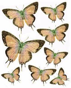 Красивые бабочки-шаблоны