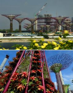 "Solar powered, rainwater collecting, plant climbing ""trees"" in a new conservatory by the sea in Singapore."
