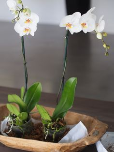 Typical Domestic Babe: How To: Potted Orchids Displayed In A Dough Bowl
