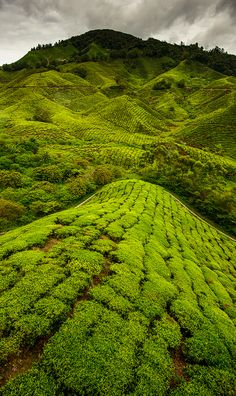 The Cameron Highlands - even more beautiful in person. The Cameron Highlands is one of Malaysia's most extensive hill stations. The size of Singapore, it occupies an area of 712 square kilometres in the Titiwangsa Mountains. What A Wonderful World, Beautiful World, Beautiful Places, Laos, Brunei, Places Around The World, Around The Worlds, Timor Oriental, Vietnam