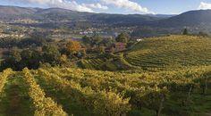 Los mejores vinos gallegos según Pepe Solla
