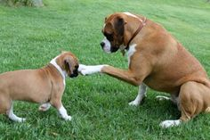 """""""You got a little somethin' on your face.  I'll get it for you.""""  (boxer)"""