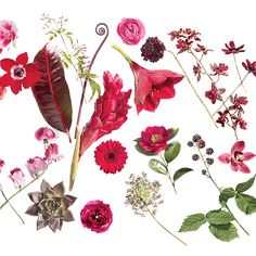 Brides.com: . Click through to see our favorite flowers available in this spectrum—from to red to burgundy.