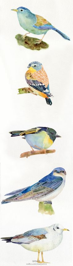 watercolor birds by carter flynn