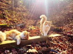So Glad You Could Make it | unflatteringcatselfies:  To enter the forest you...