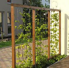 Remodeling and renovation of modern garden design with modern planting Drahtrahmen mit Hopfen Mehr Herb Garden Design, Garden Deco, Modern Garden Design, Landscape Design, Diy Garden, Wire Trellis, Garden Trellis, Hops Trellis, Pea Trellis
