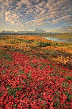 Wonder Lake view of Mt. McKinley
