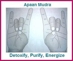 The Apaan mudra is an extremely important and useful mudra that first detoxifies (and, therefore, purifies) the body and the energizes it. Hand Mudras, Reiki Meditation, Qigong, Yoga Benefits, Chakra Healing, Reflexology, Tai Chi, Yoga Fitness, Yoga Poses