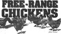 Great article on all the needs of raising Free-Range Chickens.