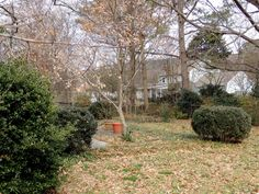 Spacious, fenced backyard lends to lots of room to run, play, entertain, and enjoy nature